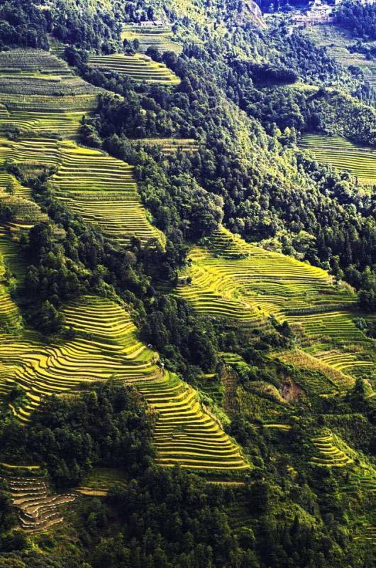 壁纸 成片种植 风景 植物 种植基地 桌面 530_800 竖版 竖屏 手机