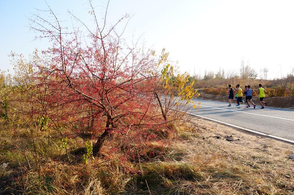 内蒙古包头市赛汗塔拉生态园