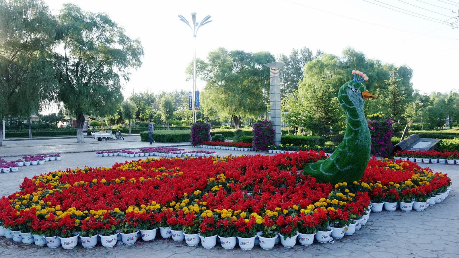 公园灌木植物手绘