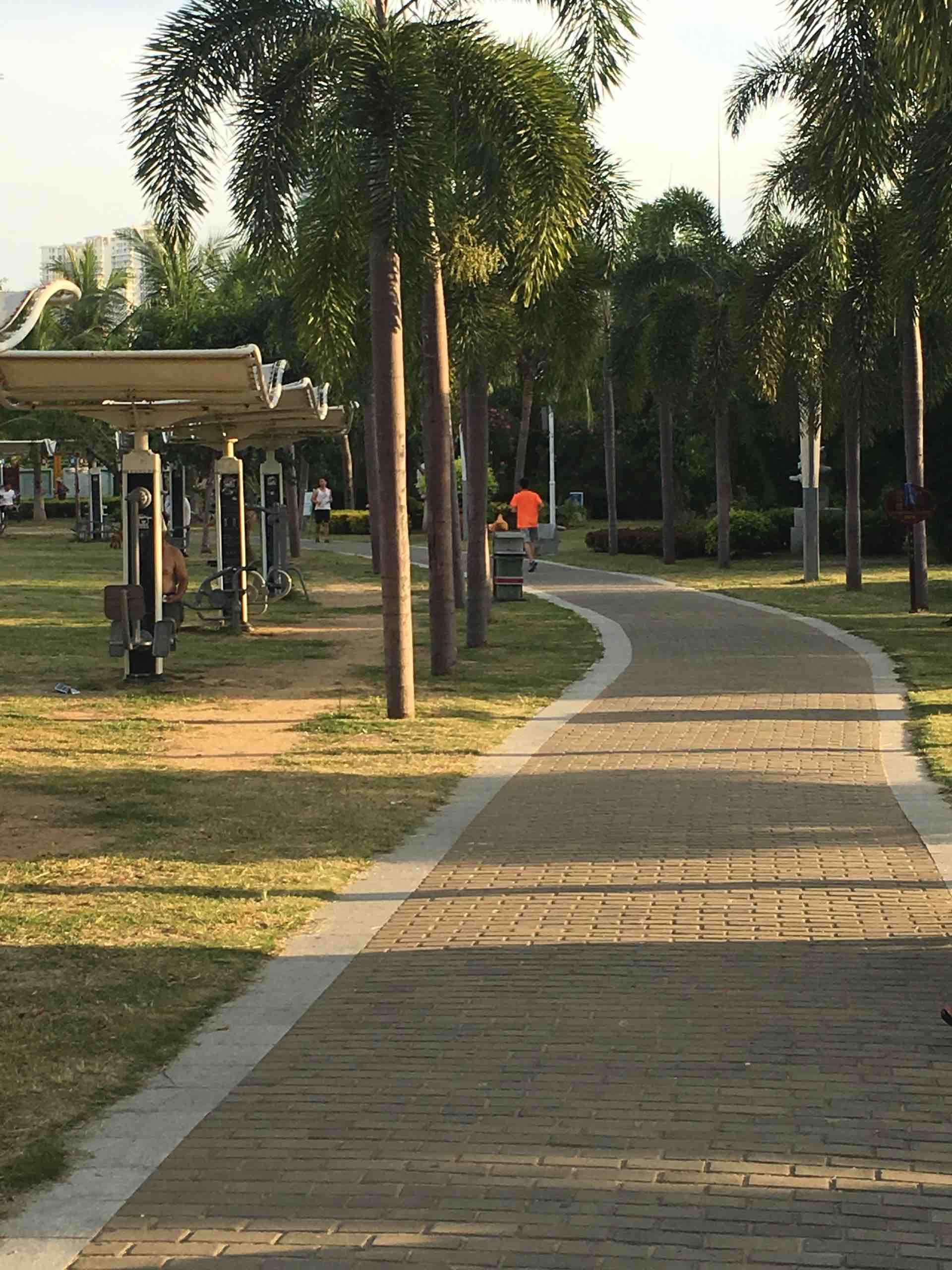 三亚红树林公园健康步道