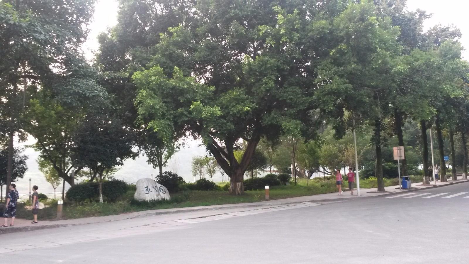 树 榕树 1600_900